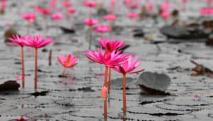 Article: Understanding the Nature of Suffering and Personal Responsibility: A Buddhist Perspective for the Modern Therapeutic Context