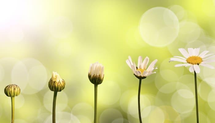 Insight Inquiry: Calling Forth Inner Wisdom