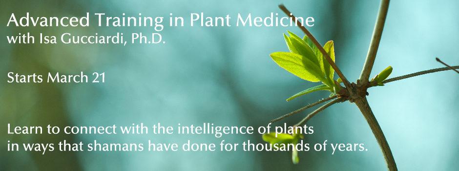 Advanced Training in Plant Medicine_Slider